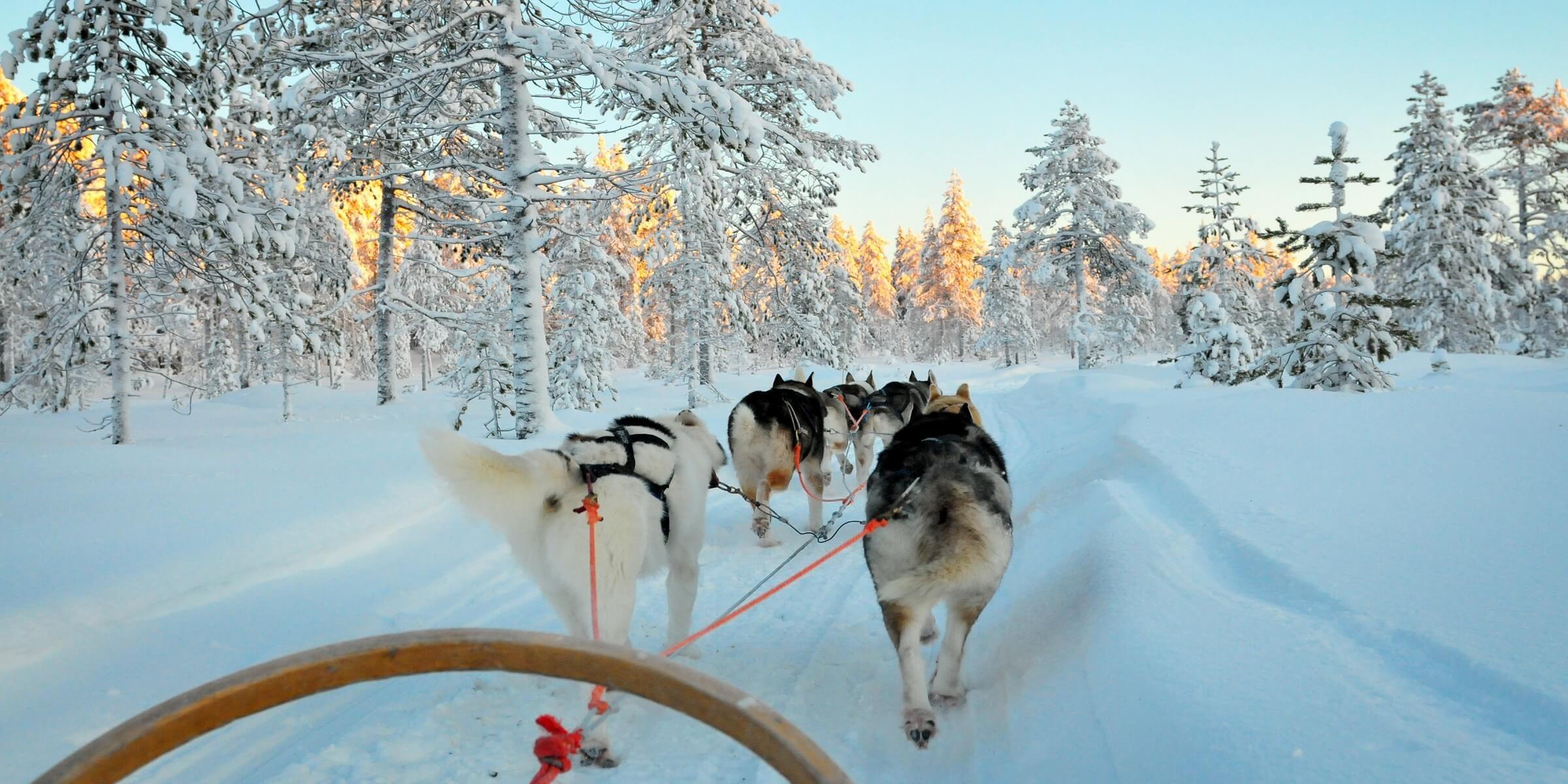 Die Husky-Tour in Lappland ist immer ein absoluten Highlight