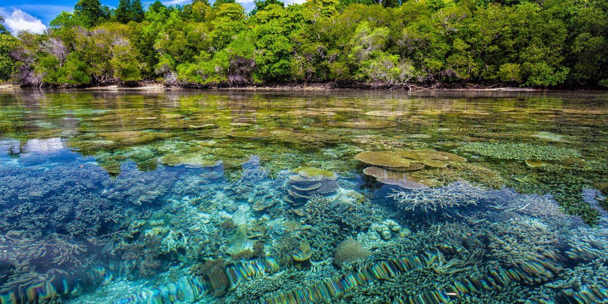 Auf Ihrer Singlereise nach Mexiko haben Sie die Möglichkeit in fabelhafte Korallenriffe abzutauchen