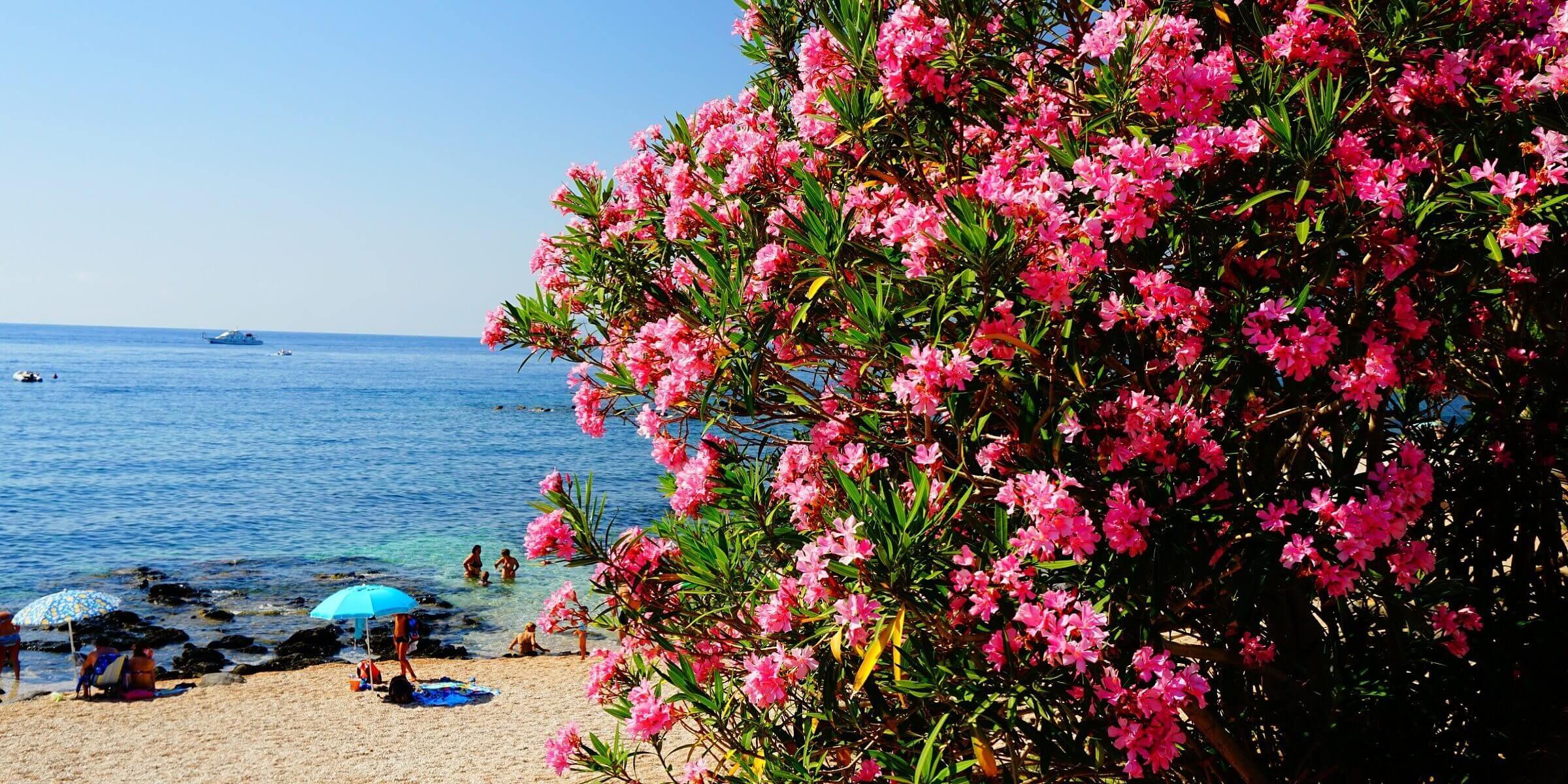 Auf Sardinien herrscht eine wahre Blütenpracht