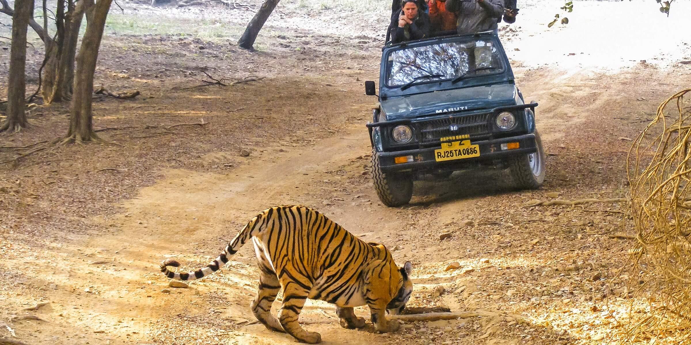 Wilde Tiere auf einer Pirschfahrt in Indien erleben