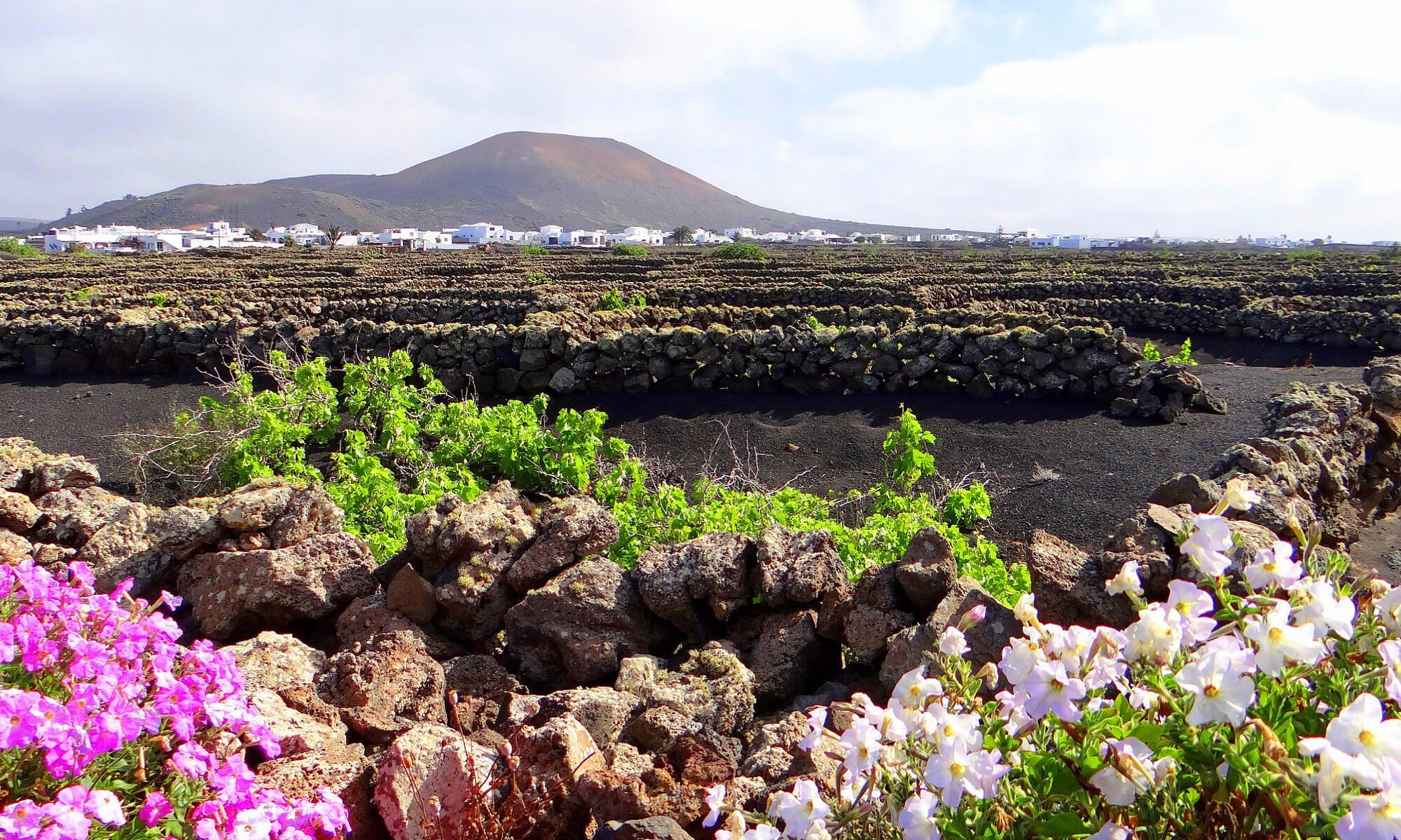 Typische Lava Landschaft auf Lanzarote.