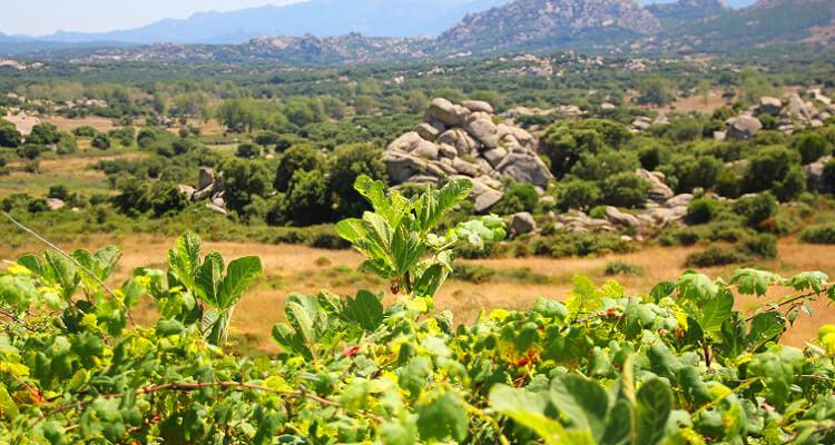 Single Ausflug nach Barbagia auf Sardinien
