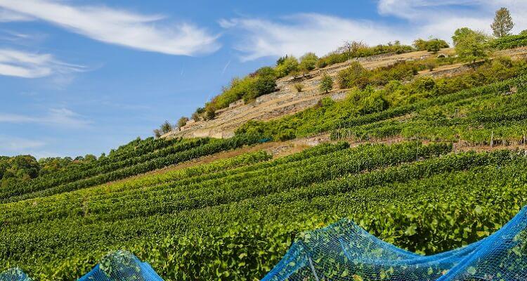 Weinanbau-Gebiet in Kanada