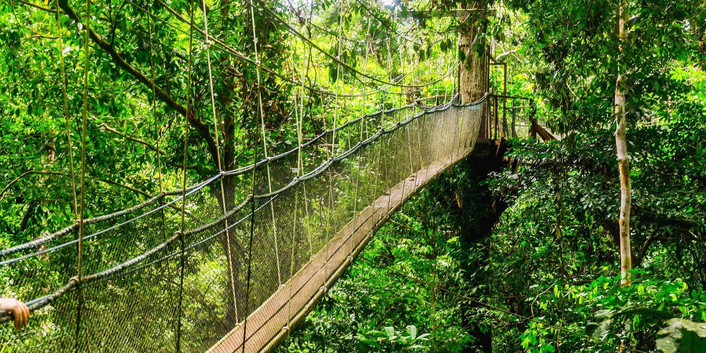 Auf Borneo besuchen Sie den Mulu Sarawak Nationalpark