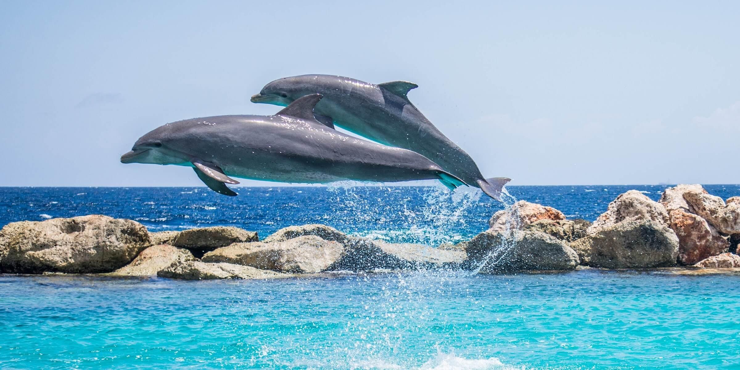 Sehen Sie Delfine in freier Wildbahn