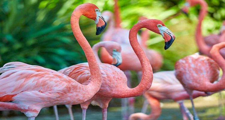 Die Flamingos von Celestun