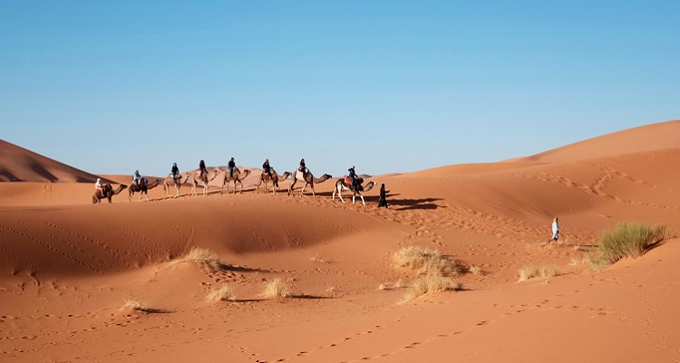 Eine Kamel-Tour in der Wüste Abu Dhabis