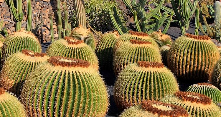 Kaktusgarten auf den Kanaren