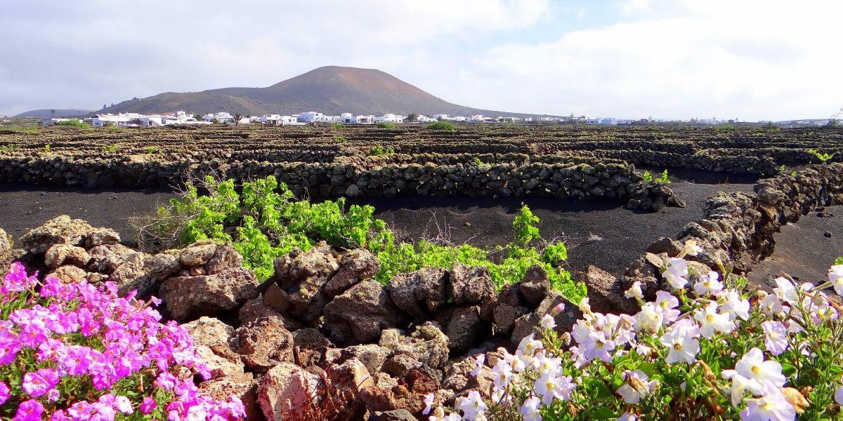 Typisches Lavafeld auf Lanzarote