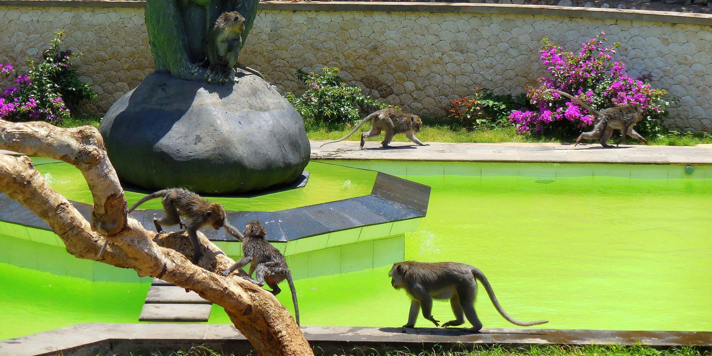 Der Affenpark auf Bali bei adamare SingleReisen