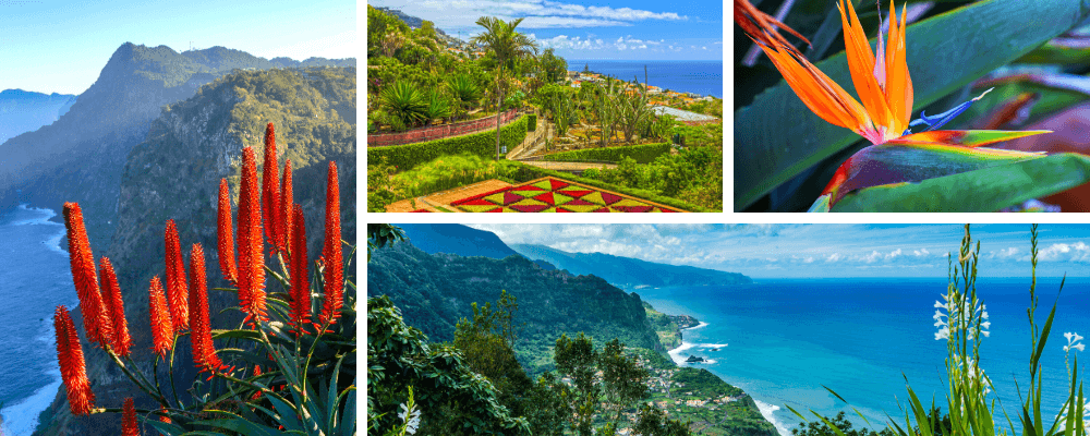 Madeiras frühlingshaftes Klima sorgt für eine immergrüne und üppige Vegetation