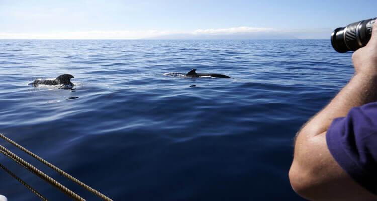 Singlereise nach Gran Canaria - Bootstour mit Walen und Delfinen