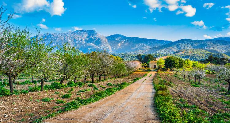 Singleurlaub auf Mallorca - Landschaft