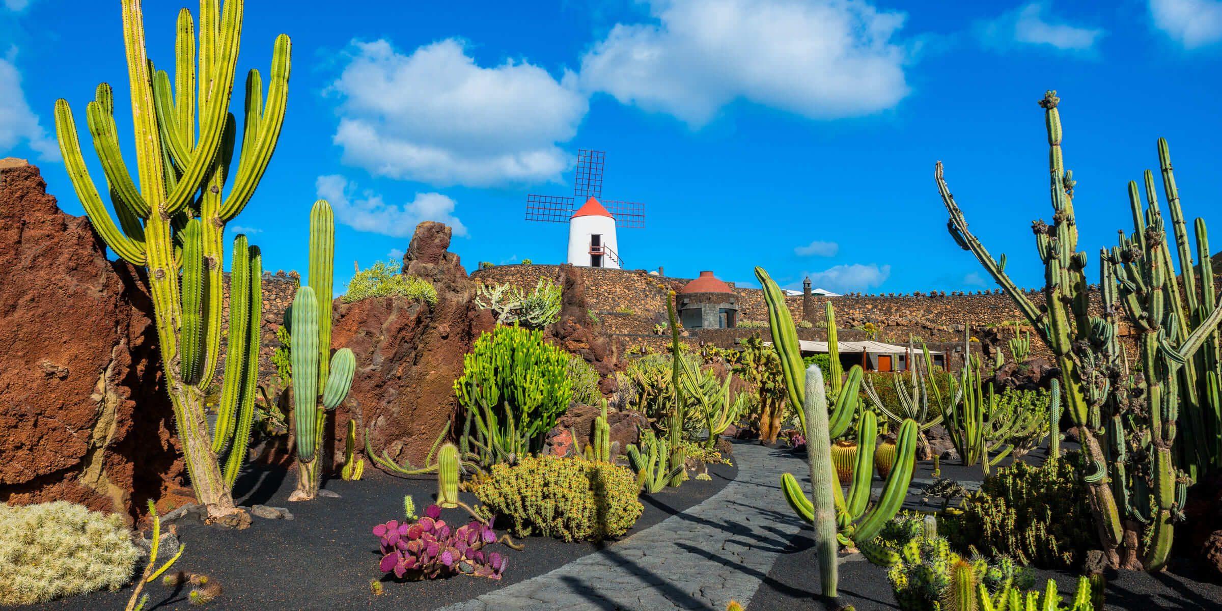 Wunderschöne Natur auf einer Singlereise nach Lanzarote erleben