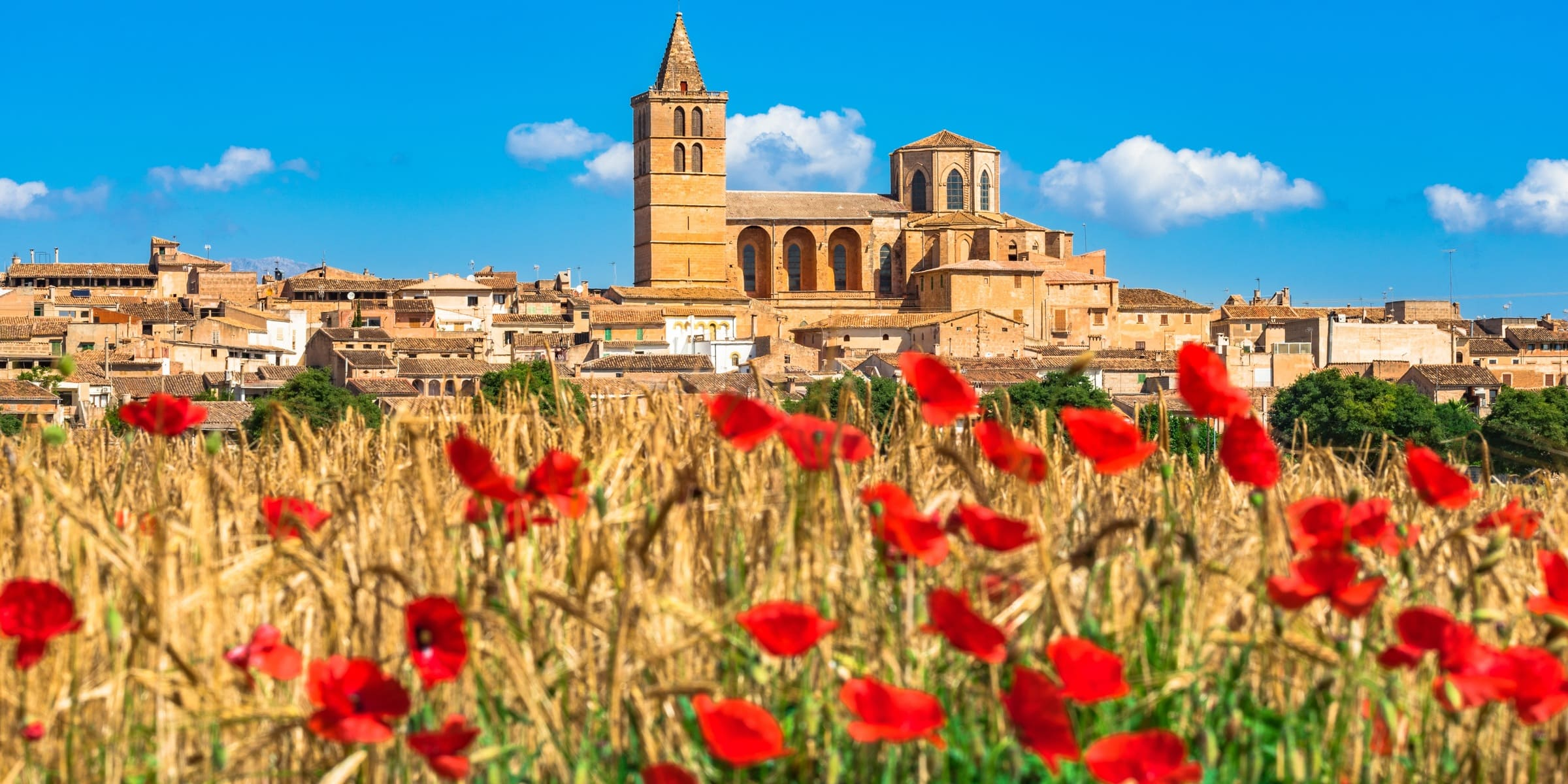 Singlereise nach Mallorca - Kirche Sineu mit Mohnfeld