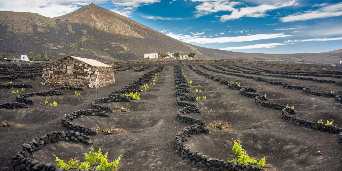 Singlereise nach Lanzarote - Weinanbau