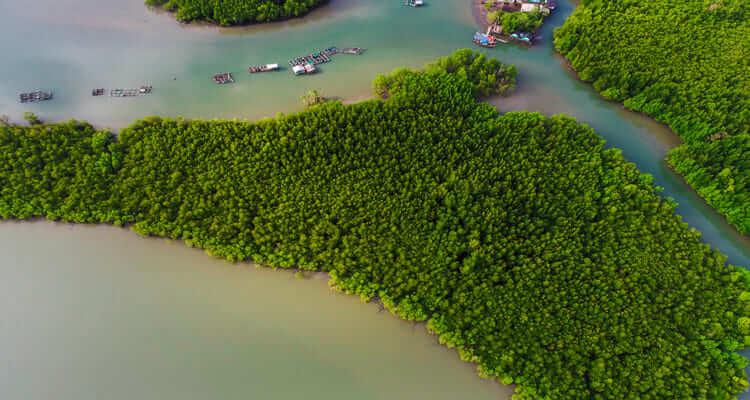 Singlereise nach Abu Dhabi - Mangrovenwälder