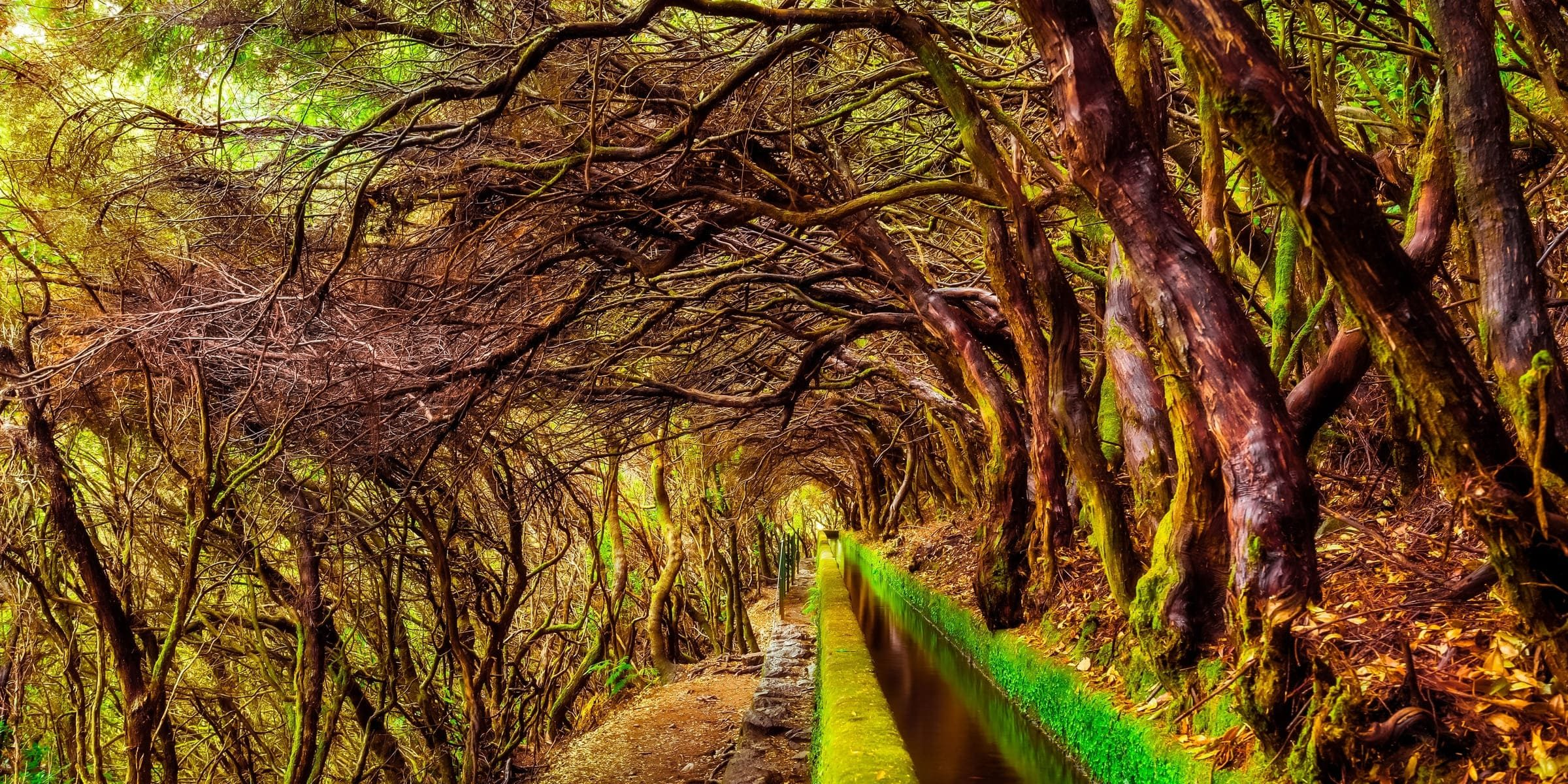 Singlereise nach Madeira - Wanderpfad Levada