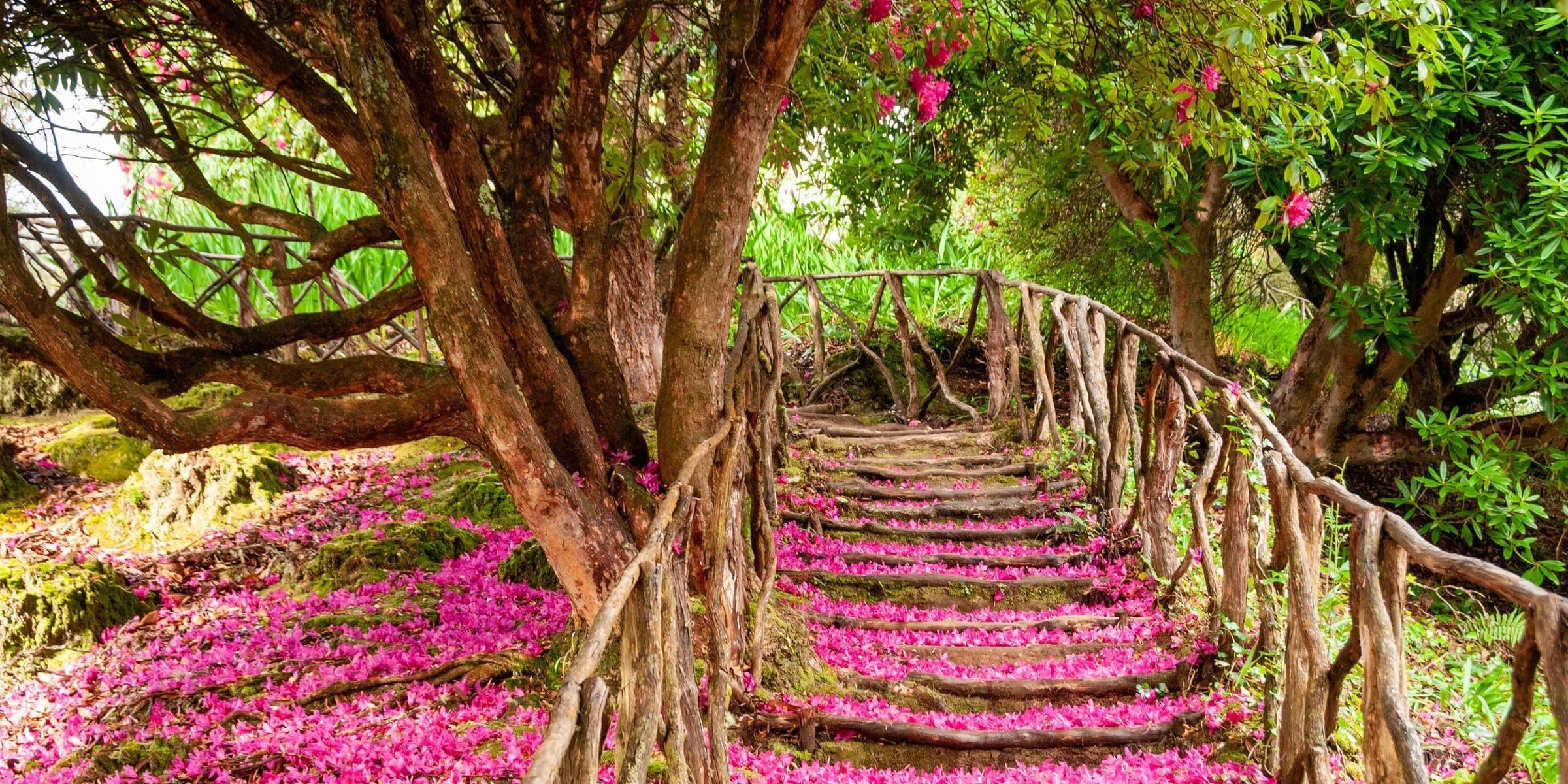 Singlereise nach Madeira - Pfad mit Blütenblättern