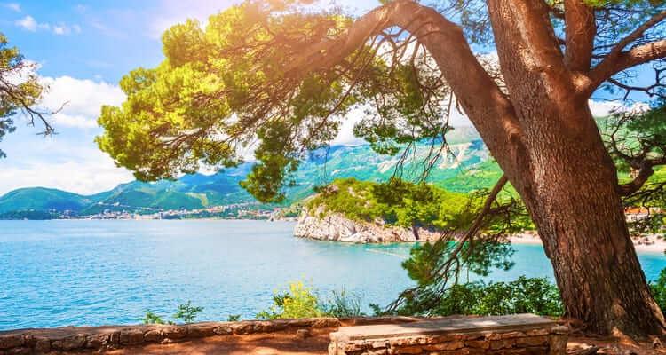 Singlereise nach Montenegro - Pinien in Petrovac