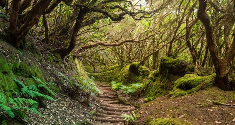 Singlereisen nach Teneriffa - Anaga Gebirge