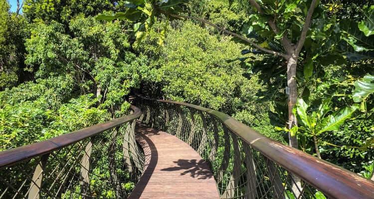 Singlereise nach Südafrika - Kirstenbosch Botanischer Garten
