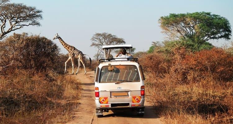 Singlereise nach Südafrika - Giraffe vor Jeep