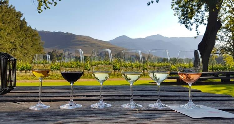 Singlereise nach Südafrika - Weinprobe